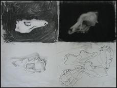 Study of dog skull
