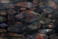 Fish Farm, 2011